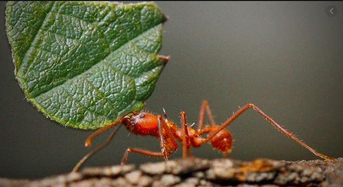 Semut pekerja